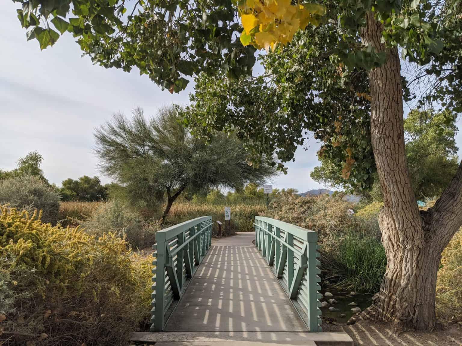 green bridge among changing trees at sweetwater wetlands park in tucson arizona