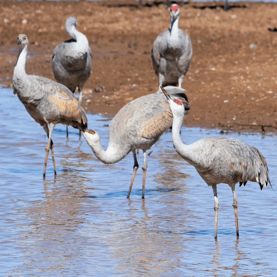 sights in southern arizona: whitewater draw wildlife area