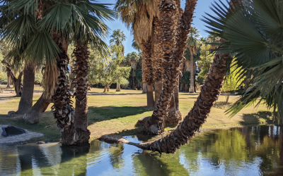 Fun and Free in Tucson: Agua Caliente Park