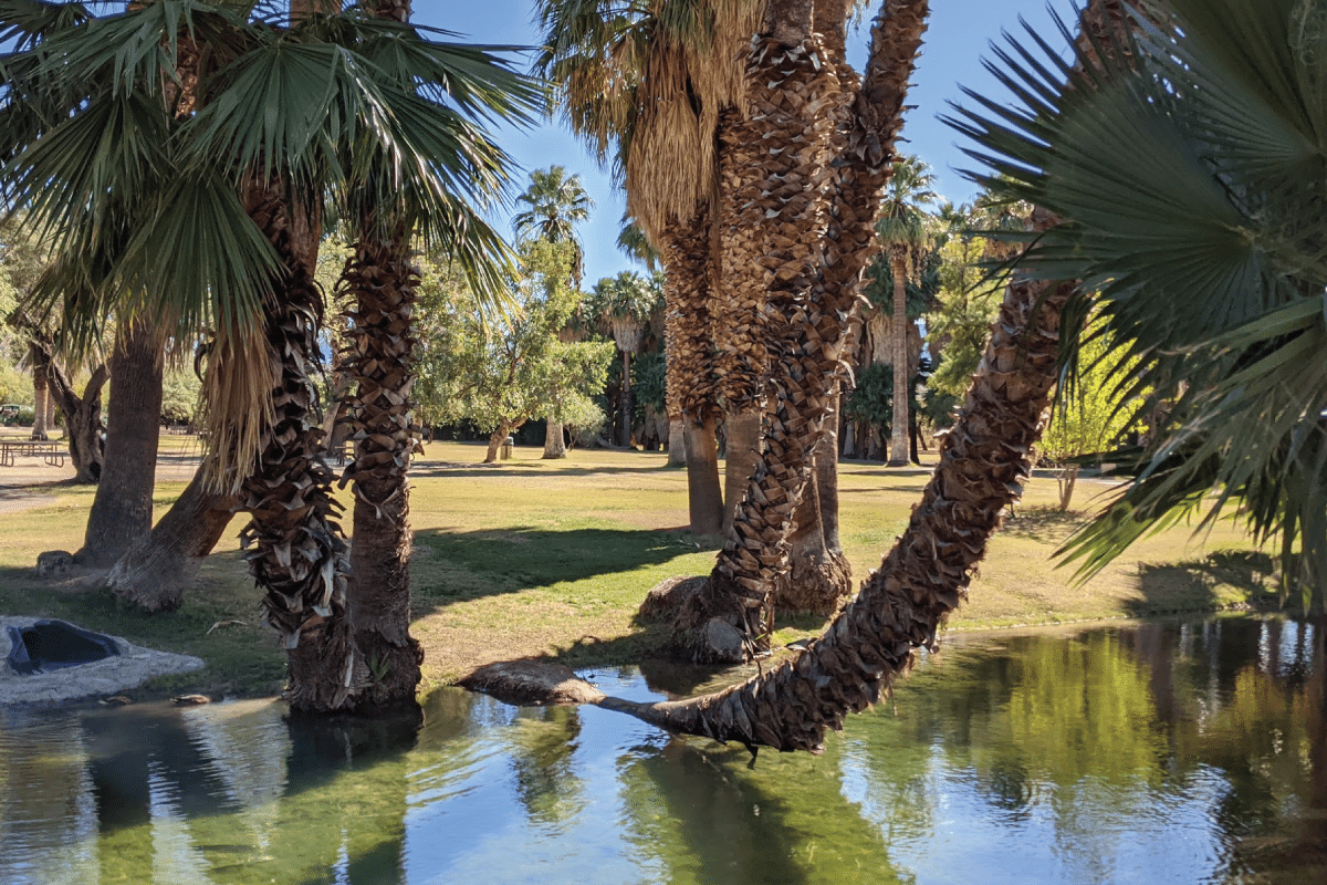 fun and free in tucson agua caliente park